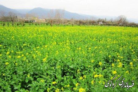 روستاي تاريخي و باستاني سركلاته خرابشهر (تميشه باستان)