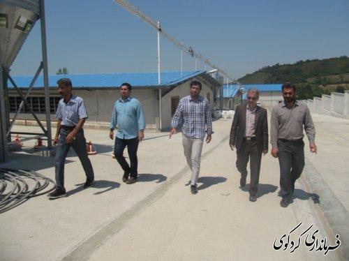 بازدید فرماندار از مجهزترین پروژه پرورش مرغ مادر استان