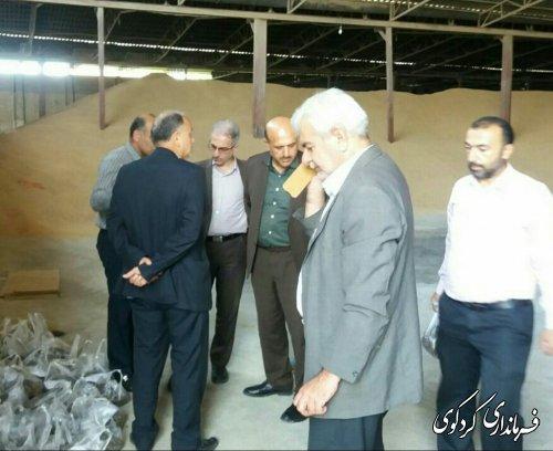 بازدید فرماندار کردکوی و مدیرکل اقتصادی استاندار از مراکز تحویل و خرید کلزا در شهرستان
