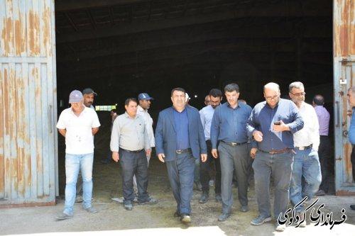 با پیگیریهای فرماندارکردکوی  ؛تحویل و تخیله انبارهای مراکزخرید محصول کشاورزی کلزا سرعت گرفت