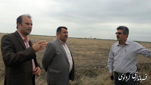 سال جاری مجتمع گلخانه ای به مساحت  ۷ هکتار و با اعتبار ۱۰ میلیاردتومان در شهرستان کردکوی ساخته میشود