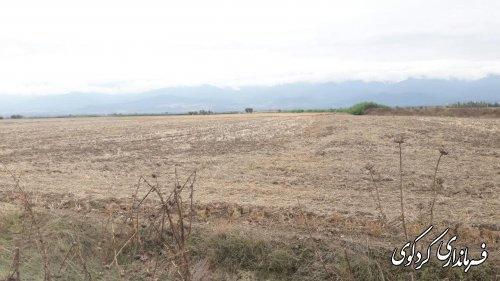 سال جاری مجتمع گلخانه ای به مساحت  ۷ هکتار در شهرستان کردکوی ساخته میشود