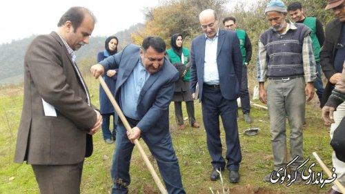 فرماندار کردکوی: ۱۰۰ هکتار از اراضی شیبدار سطح شهرستان در سال جاری زیتون کاری می گردد