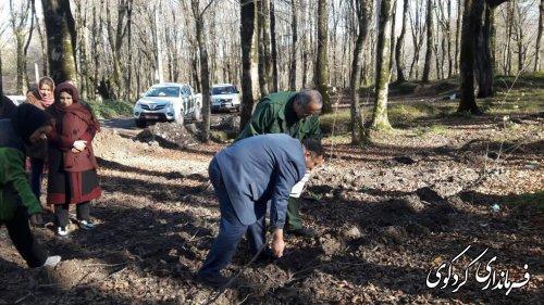 70 هکتار از اراضی جنگلی کردکوی غنی سازی و بذر پاشی می شود