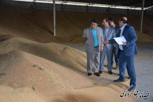 با میانگین برداشت ۳۷۰۰ کیلو در هکتار تاکنون ۸ هزارتن گندم از دهقانان خریداری شده است