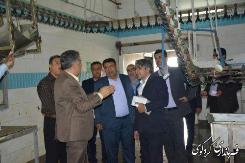 بازدید فرماندار و مدیرکل سیاسی و تقسیمات کشوری از کشتارگاه مرغ سفید زربال کردکوی