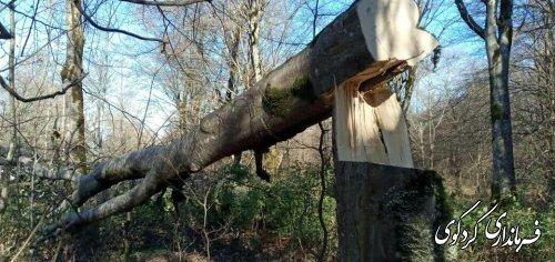 قطع غیرقانونی تعداد زیادی از درختان جنگلی روستای سرکلاته توسط عده ای از قاچاقچیان