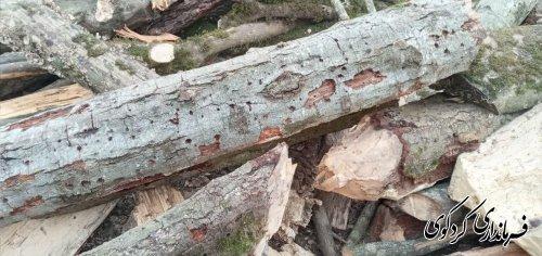 قدمنان فرماندار کردکوی: از ابتدای سال جاری تاکنون ۱۰ تن چوب جنگلی از متخلفان و قاچاقچیان در این شهرستان کشف و ضبط شده است.