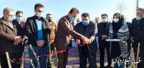 سطح کل باغهای زیتون شهرستان کردکوی به ۲۹۰۰ هکتار رسیده است./ صنایع تبدیلی و میدانبار از نیازهای اصلی بخش  کشاورزی منطقه است