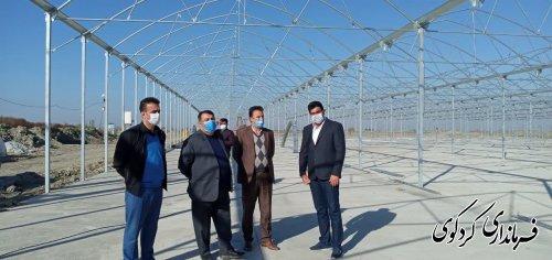 آغاز بهره برداری از نخستین فاز شهرک گلخانه ای غرب استان در ایام دهه فجر امسال