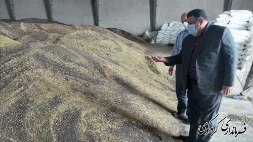 برآوردها حاکی از برداشت و خرید ۴۶۰۰ تن کلزا از کشاورزان است