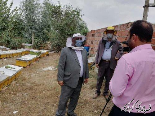 میزان تولید سالانه عسل شهرستان بین ۶۰_۷۰ تن براورد می شود و ۲۵۹ نفر در این عرصه فعالیت دارند.